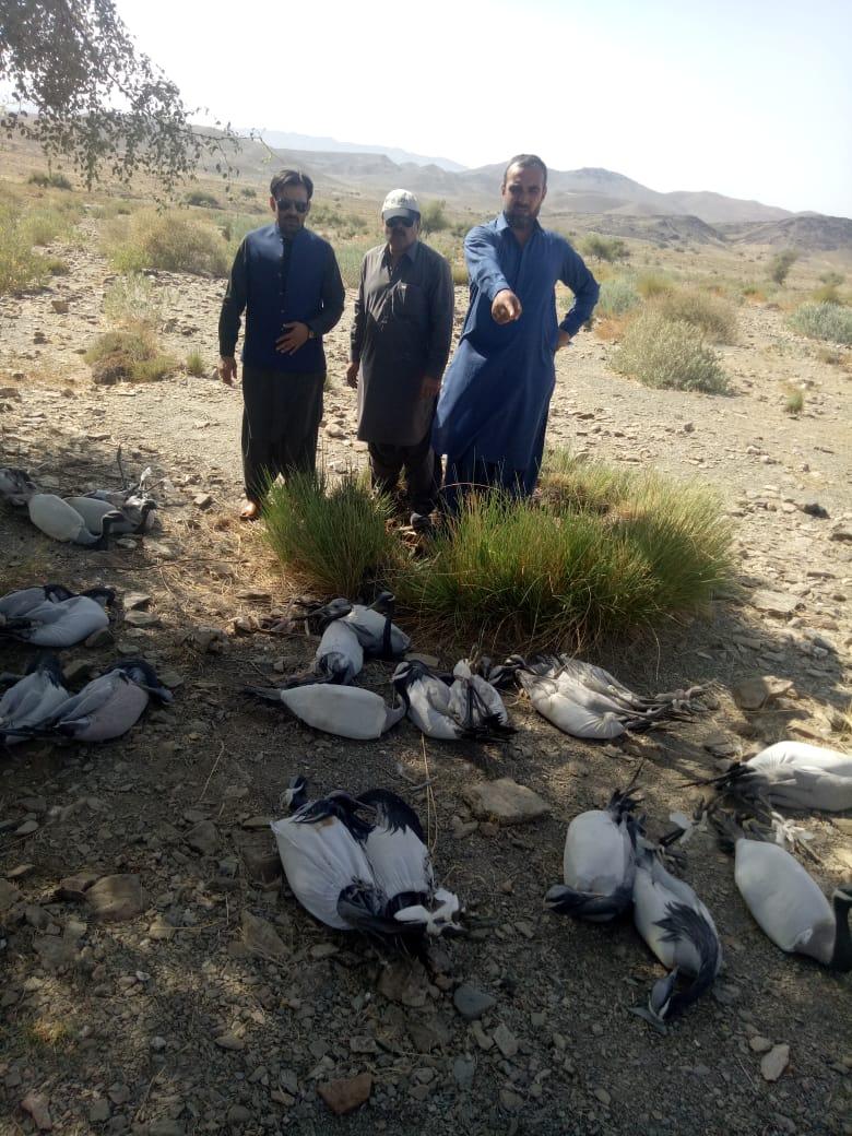 ڈسٹرکٹ کنزرویٹر ژوب شراف الدین اور دیگر عملہ پرندوں کے غیر قانونی شکار کے خلاف کارروائی کررہے ہیں (فوٹو کریڈٹ شراف الدین)