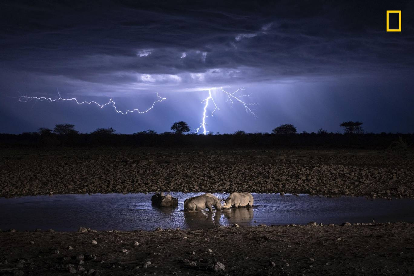 Rhinos in lightning.jpg