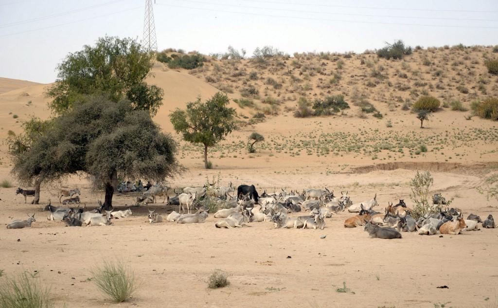 Pakistan Drought1.jpg