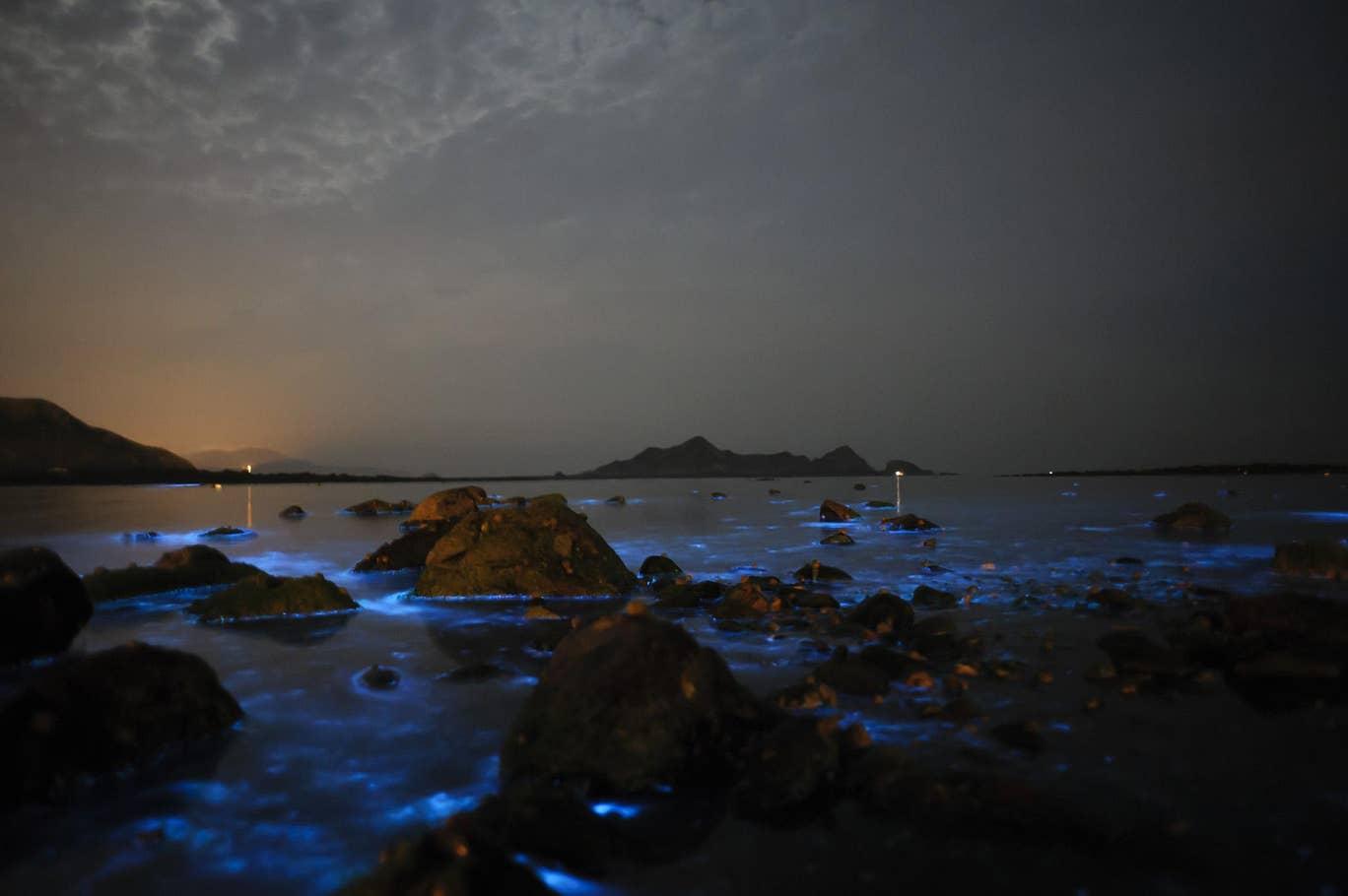 blue-tears-plankton-11.jpg