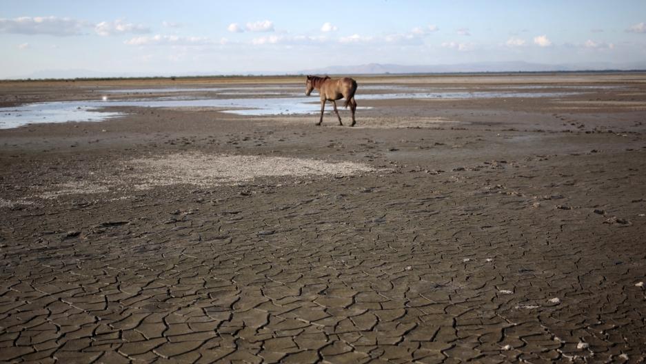 reuters_horse_on_dry_lake_copy.jpg